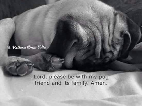 pug prayers dear god prayer pinterest pug and prayer