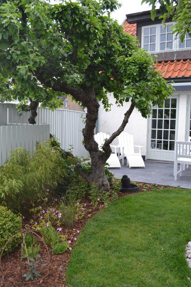 .......... Jannice , Jonas, Charlie och Bosse! Sifferplattorna slingrar sig ljuvligt igenom den lilla trädgården. De två gamla äpp...