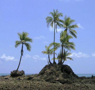Múdate a este paraíso tropical! Pero hazlo con todos tus papeles en regla. En LexLegalFlores te ofrecemos toda la asesoría necesaria en Materia Migratoria... Contáctanos: 506-2245-1640 506-6014-8965. www.lexlegalflores.com