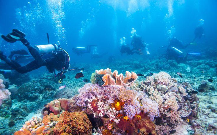 Tauchen im Great Barrier Reef, Australien © Shutterstock.com
