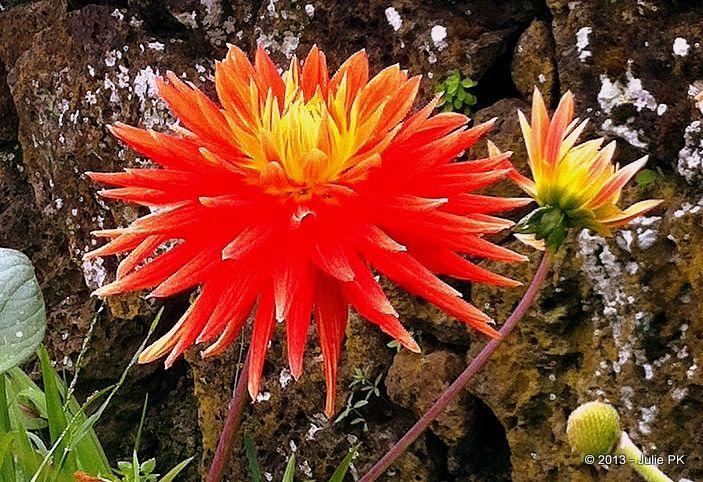 #orange #flowers #newzealand