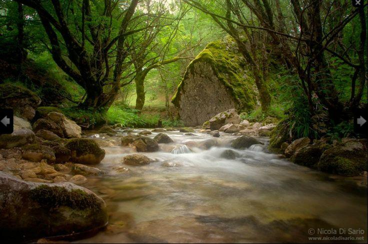 Tutela e prevenzione sul verde, firmata dopo 29 anni nuova convenzione con la Forestale | L'Abruzzo è servito | Quotidiano di ricette e notizie d'Abruzzo