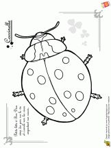 petites betes coccinelle