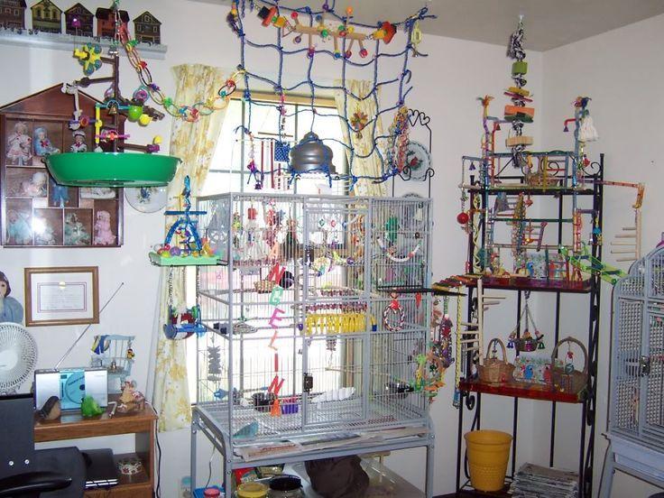 Parrot Enrichment Ideas Google Search Parrot Cages
