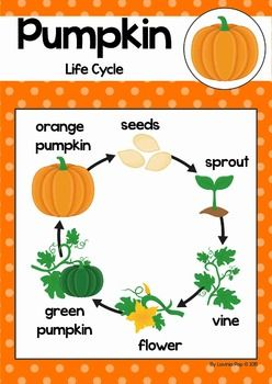 pumpkin life cycle diagram of shark life cycle diagram pumpkin life cycle | cut and paste, life cycle stages and ...