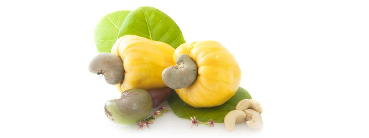 Gram positive bacteria, which cause tooth decay, acne, tuberculosis, Streptococcus pneumoniae and leprosy are all killed by anacardic chemicals present in cashew nuts which are actually seeds. By Natasha Longo.