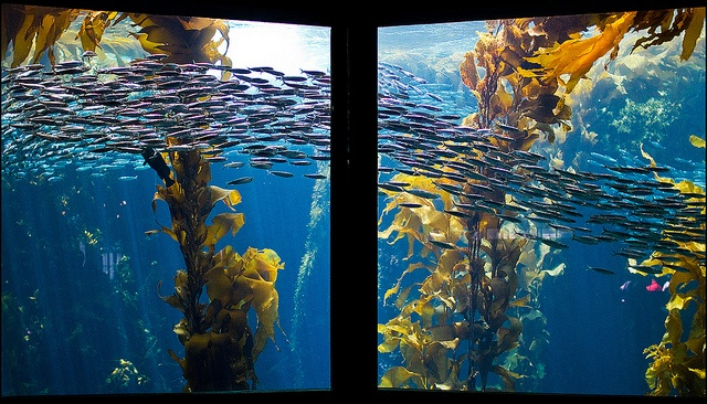 Top 10 Aquariums In The United States Travel Pinterest