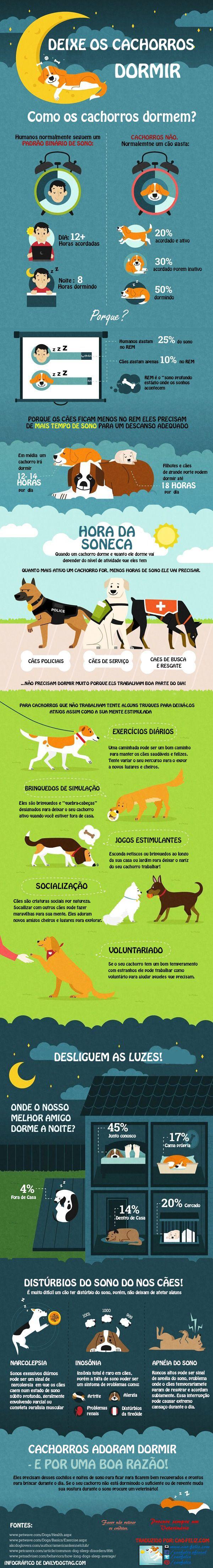 Infográfico. Como acontece o sonho dos cães!
