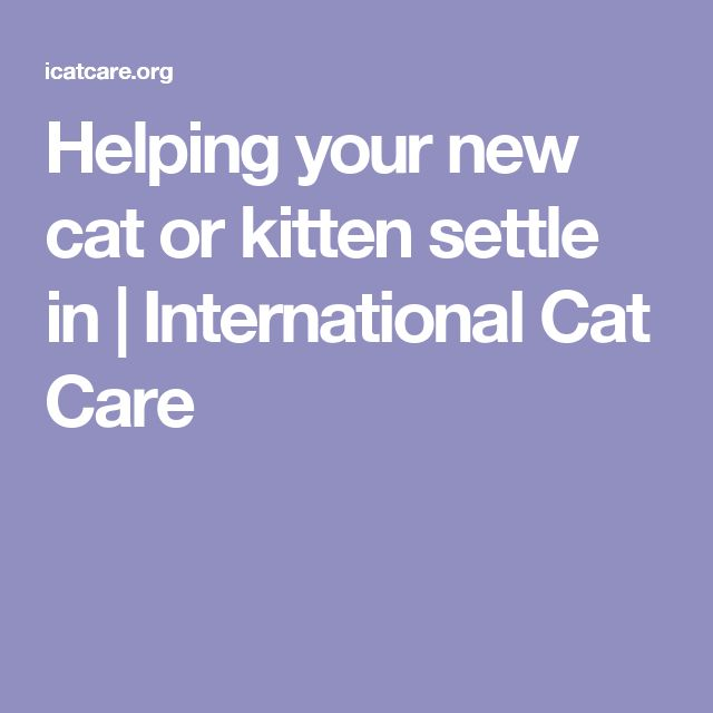 Helping your new cat or kitten settle in | International Cat Care