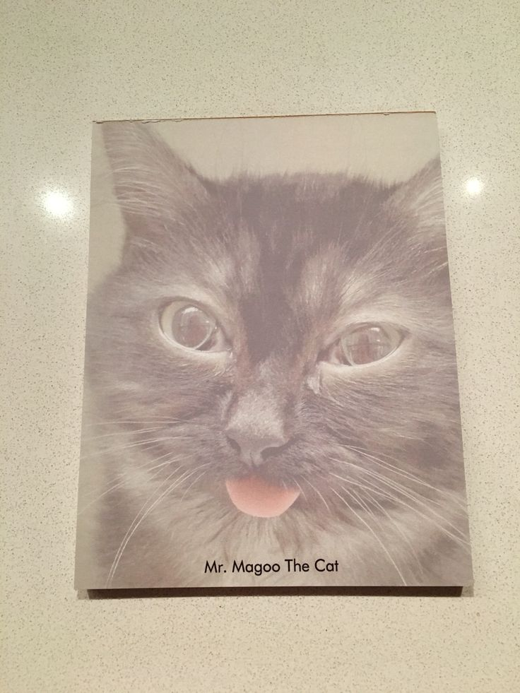Magoo Note Pads! $10.00 email mrmagoothecat@hotmail.com to get one!