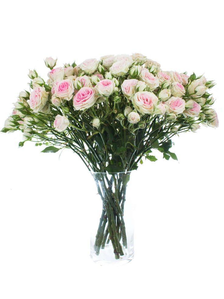 Die Mimi Eden Rose ist eine Rose der besonderes edelen Art. Jeder Stiel trägt mehrere kleine Blüten, die einen entzückenden Farbverlauf von Dunkelpink in der Blütenmitte, hin zu einem reinen Weiß am Rande aufweist.  Bitte beachten Sie, dass die Anzahl der Verzweigungen von Stiel zu Stiel …