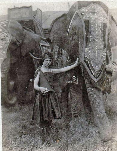 Vintage circus elephants