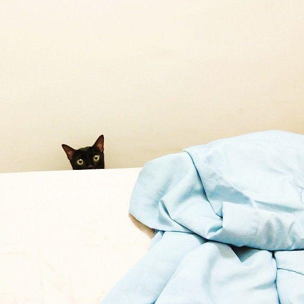 creeper cat.