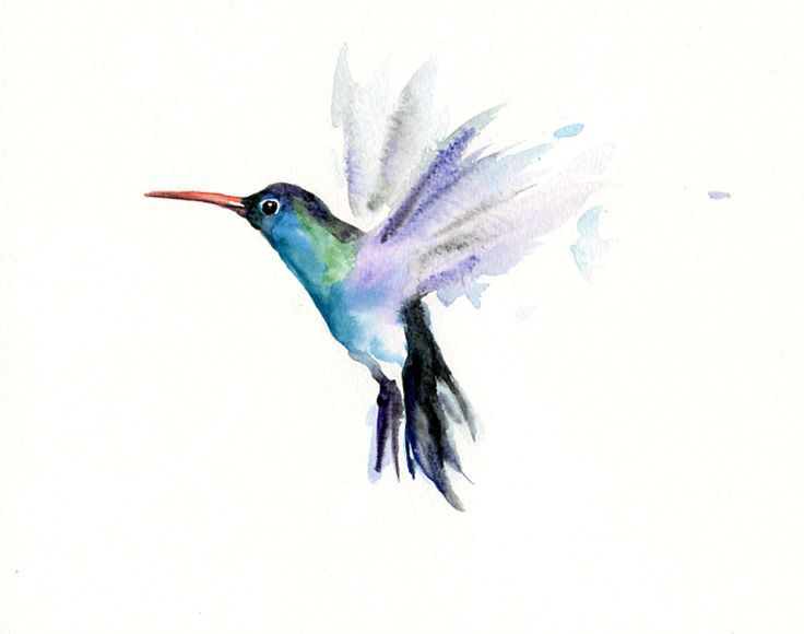 Humming bird in water color