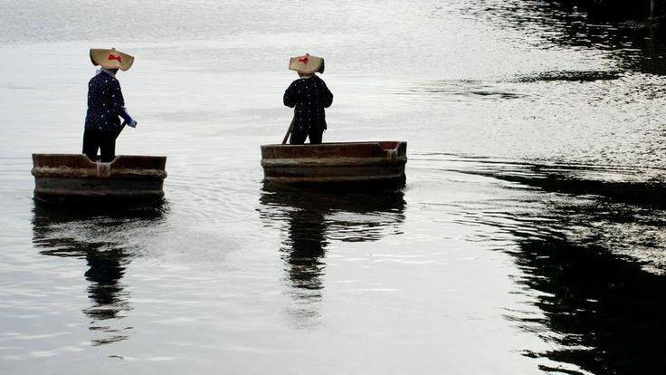 Elderly fisher women paddling taraibune, 'washbasin boat' on Sado island, Nigata prefecture, Japan