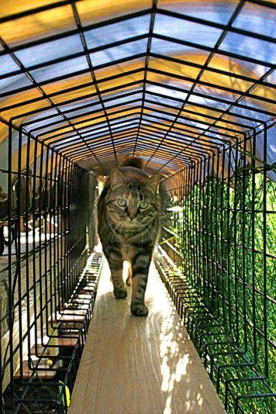 Cat Catio   Google Search