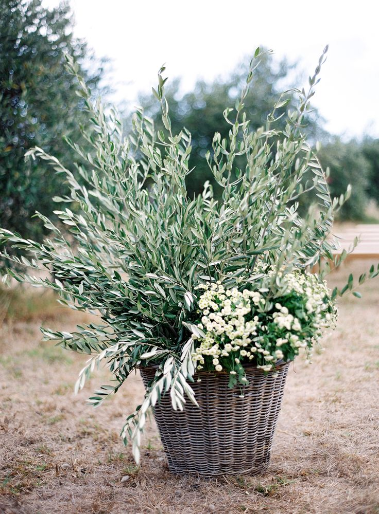 Photography: Jose Villa Photography   josevillaphoto.com Floral Design: Natural Art Flowers By Rebecca Grace   www.naturalartflowers.com.au Ceremony Venue: Private Olive Grove   n/a   View more: http://stylemepretty.com/vault/gallery/37806