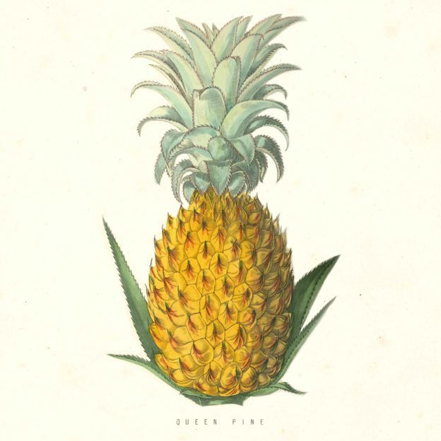 99bcabeb4c6edef3f2de792d7f484314 - Pineapples From The Lost Gardens Of Heligan