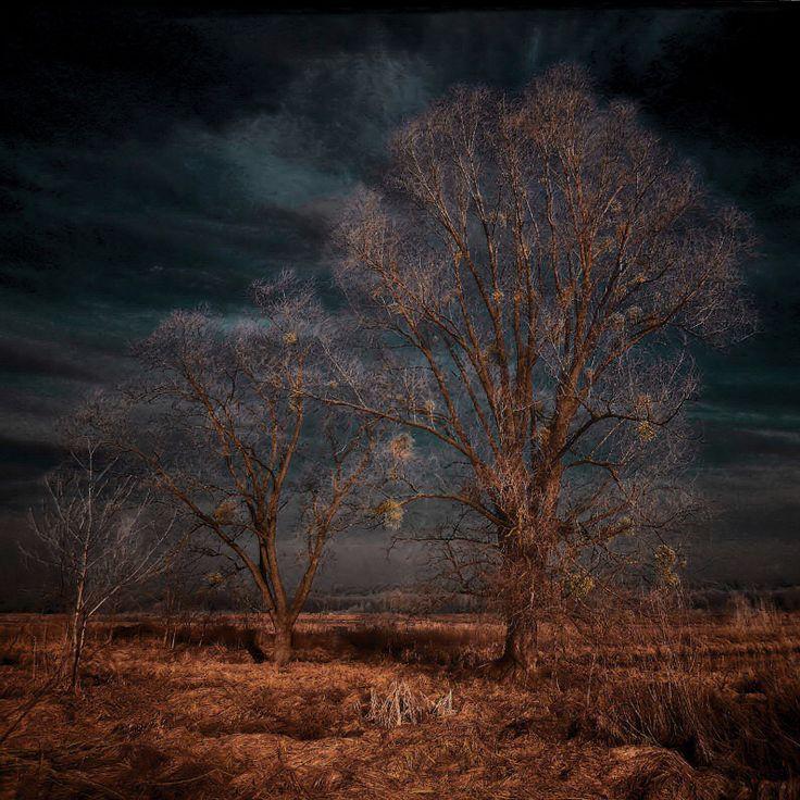 Artwork, Nikon D5100 Hoya Infrared Filter R72 - Image #528565