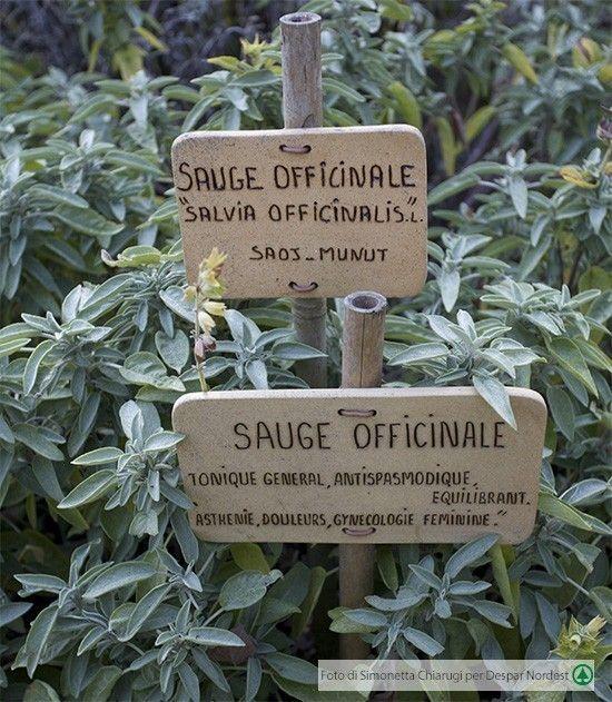 #salvia officinalis: cura il corpo, profuma il cibo e colora il giardino     casadivita.despar.it