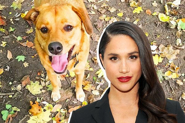 Newly Engaged Meghan Markle Is Bringing Her American Dogs to the British Royal Family