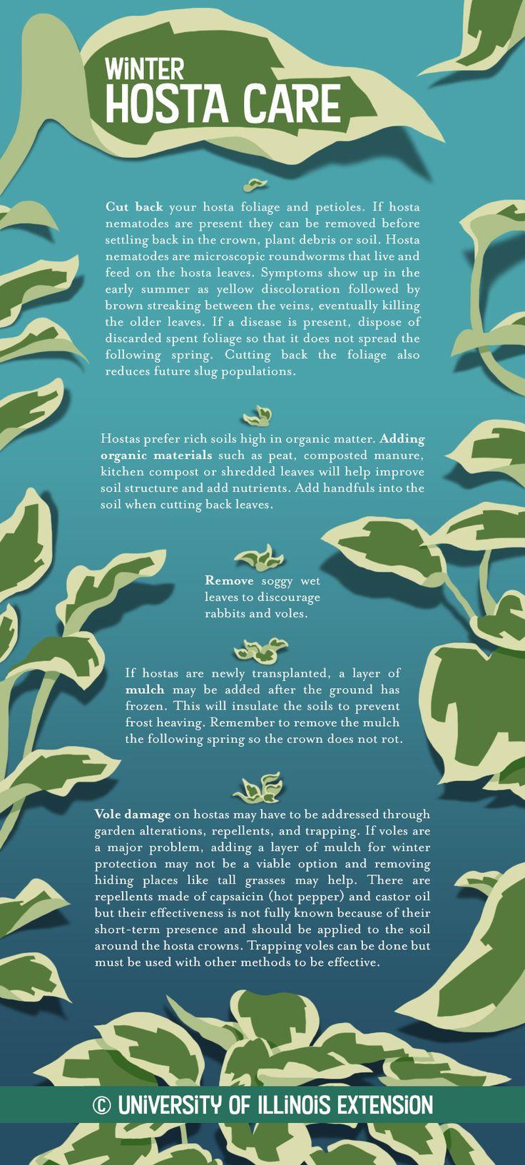 Flower Garden Ideas Illinois best 25+ hosta gardens ideas only on pinterest | shade garden