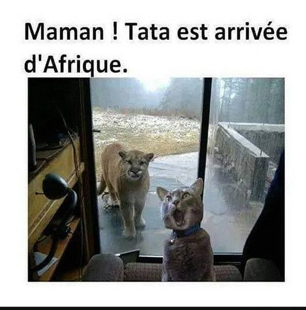 Image texte drôle animaux | Blague animaux, Humour animaux, Image drole animaux