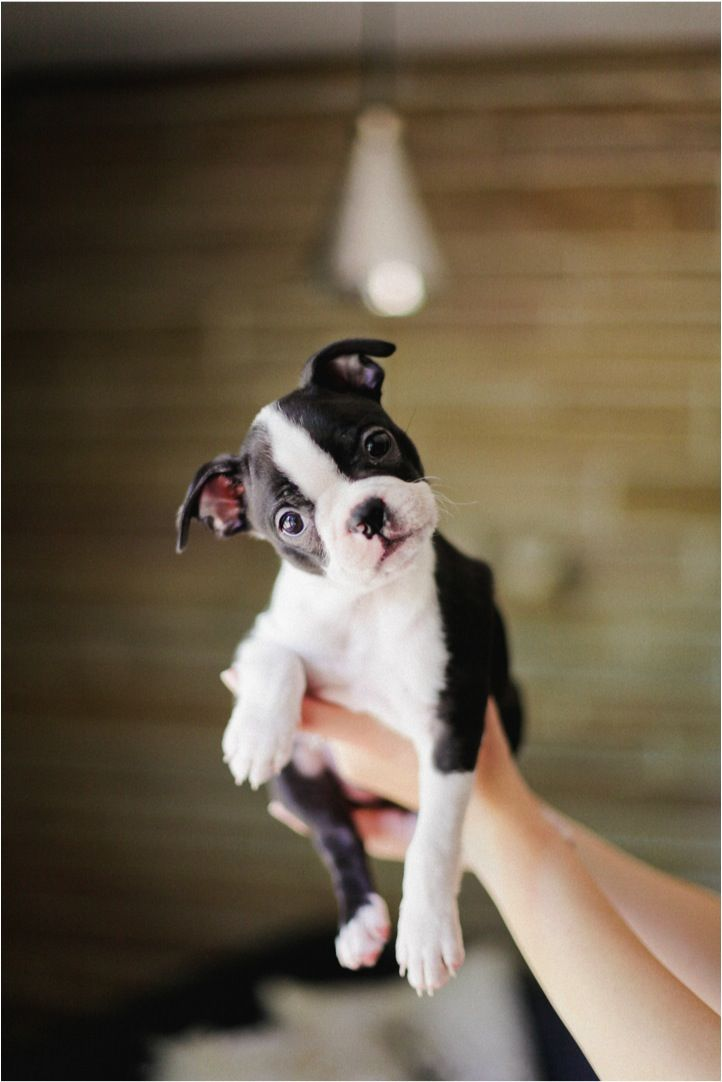Makes us want a puppy...!