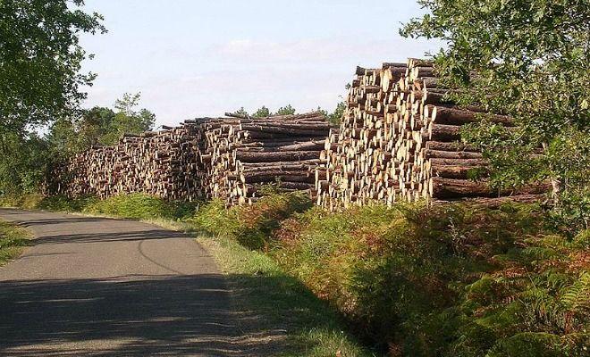 Tempête Klaus, vers un plan régional pour intensifier la récolte en bois