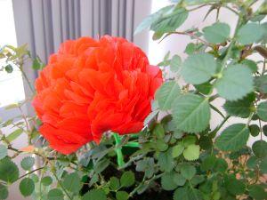 În dar - flori din hârtie de mătase