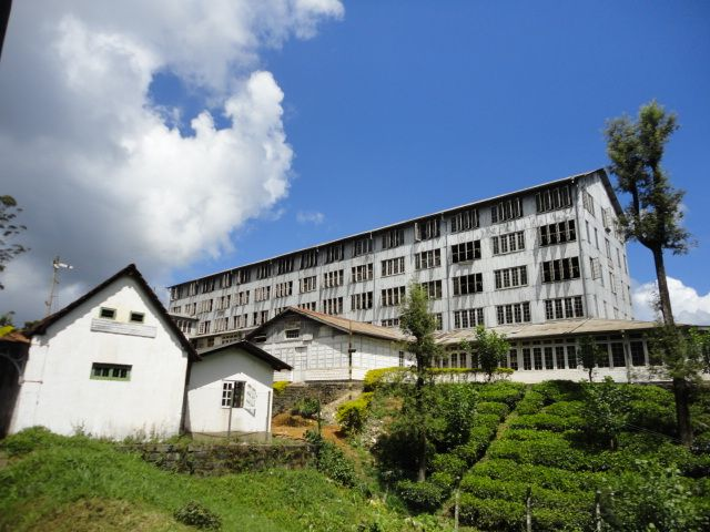 Tea Factory - Thalwakale