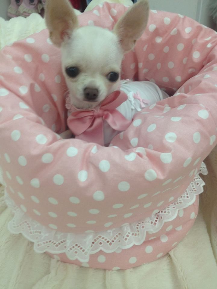1000+ ideas about Pink Dog Beds on Pinterest | Pink Dog ...