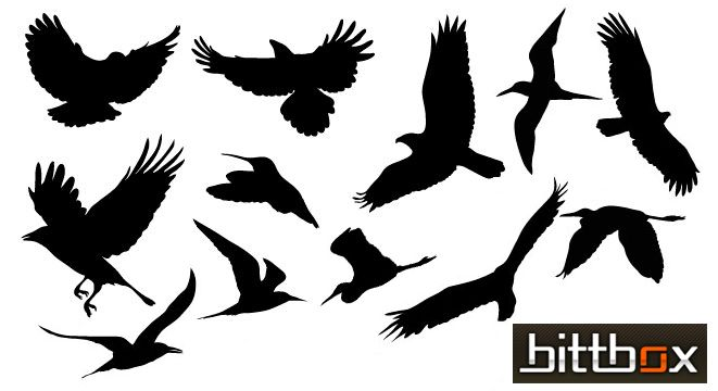 free_vector_birds.png (661×360) | tattoos | Pinterest ...
