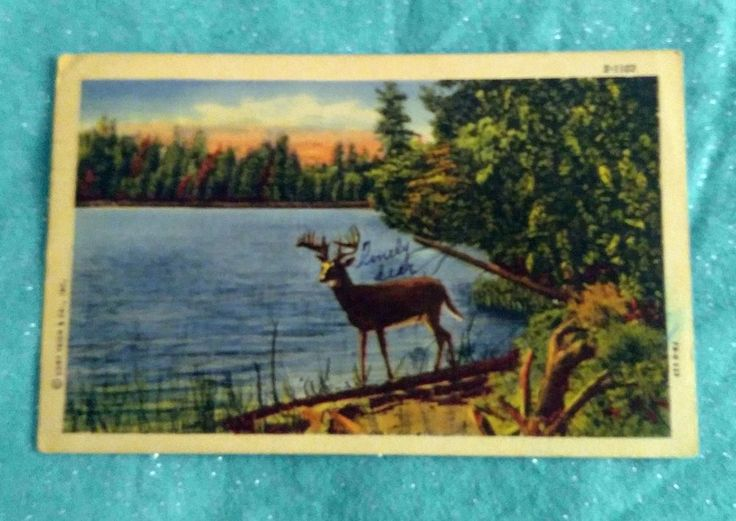 Greetings From Tomahawk, Wisconsin Post Card