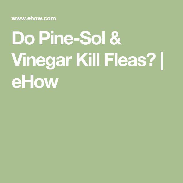 25 best ideas about killing fleas on pinterest dog flea treatment flea spray for house and. Black Bedroom Furniture Sets. Home Design Ideas