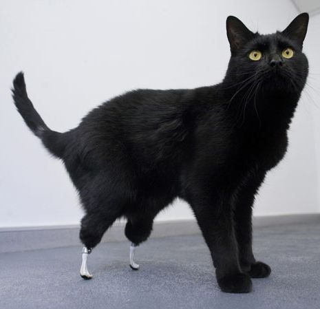 Oscar the Bionic cat Oscar is owned by Kate Allan and Mike Nolan, who lives on Channel Islands of Jersey.In 2009 Oscar had both hind paws severed by a combine harvester. Since then he has undergone a pioneering operation to add prostetic feet.
