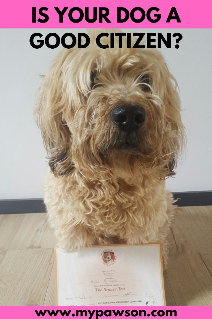 Good Citizen Dog Scheme Dog Training Programme Dog Health Tips