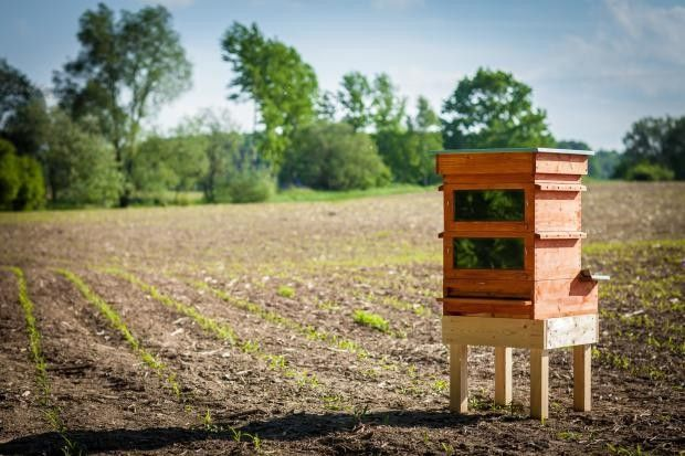 An innovative new beehive, Thermosolar Hive, harnesses the power of the sun to target Varroa mites, one of the most devastating factors in colony collapse disorder.