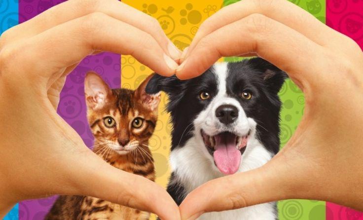 Nada de vender fihotes! Pet shop do interior de SP abriga animais para adoção