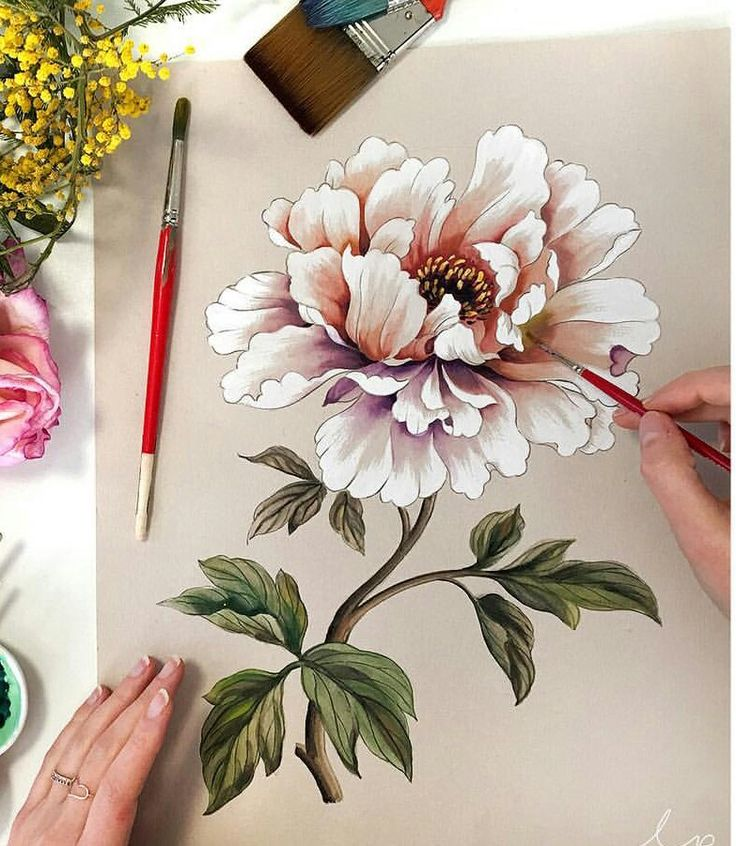 Chinese Flower Line Drawing : Best peony drawing ideas on pinterest