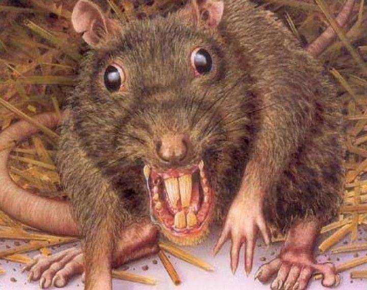 تفسير حلم الفار الصغير والكبير في المنام لابن شاهين موقع مصري Pest Control Services Homemade Mouse Traps Garden Pest Control