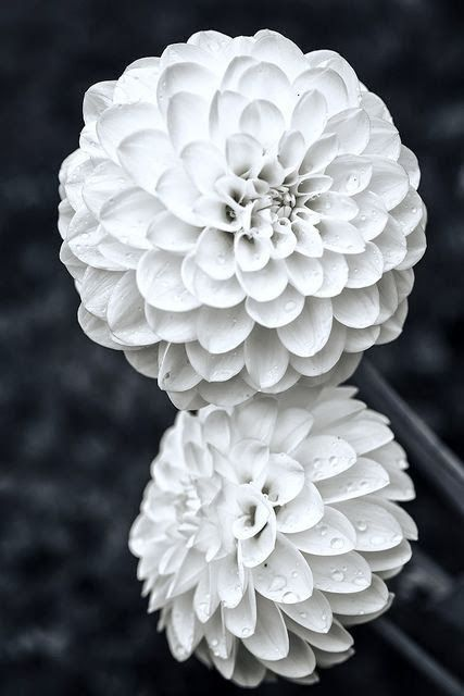 best white flowers images on, Beautiful flower