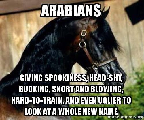 Horse meme soon - photo#52