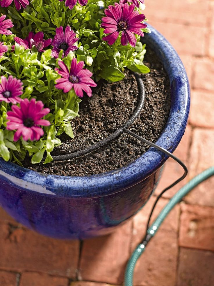Micro soaker hose drip system is perfect for pots and planters on your balcony. Water 5 plants with this easy-to-use system.  | Gardeners.com