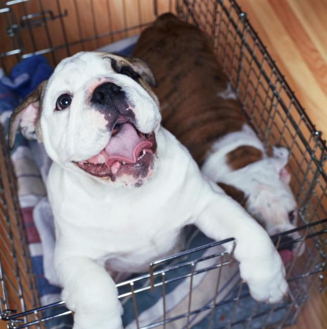 How to Crate Train Your Dog or Puppy