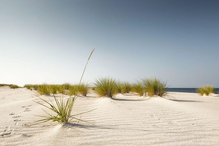 Strandfeeling (Ellenbogen / Sylt), Dünen, Ellenbogen, Küste, List, Nordsee, Schilf, Strand
