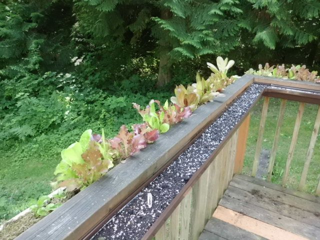 Deck Garden Ideas landscaping around patios photo want your landscape to come to life at night using our Gutter Garden On The Deck Waist High Crops You Dont Have