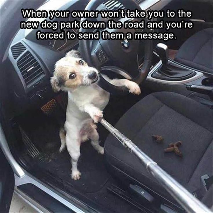 Funny Animal Pictures Of The Day - 21 Images #funnydoghumor