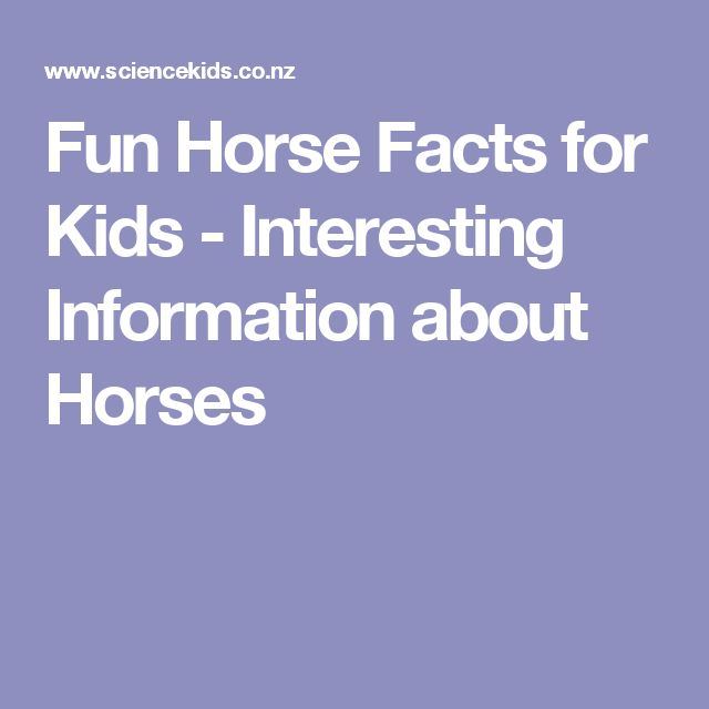 Fun Horse Facts for Kids - Interesting Information about Horses