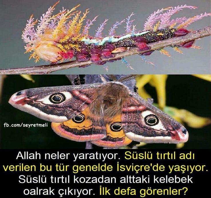 Allah neler yaratıyor